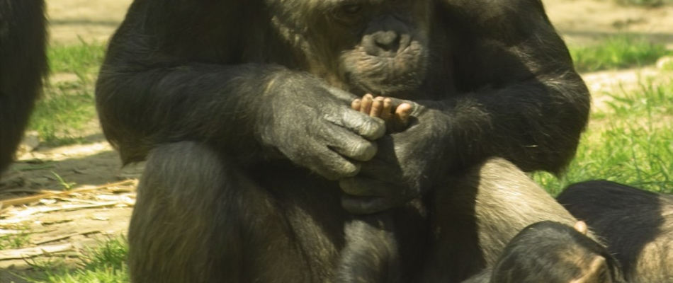 Verschenken Sie eine Tierpatenschaft oder eine Jahreskarte Zum Muttertag: Ein Geschenk, das doppelt Freude macht!