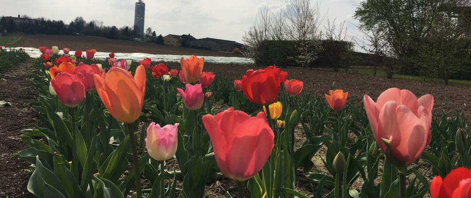 Es blüht auf unserem Blumenfeld