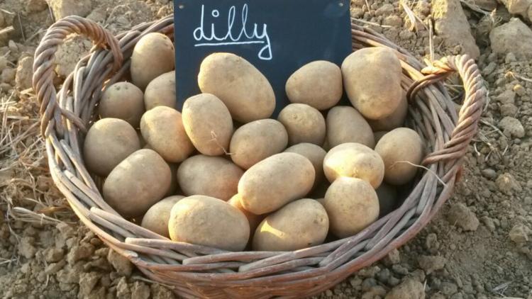 Kartoffelhof Schmälzle aus Schwaigern